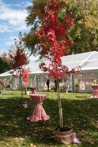 Tent rentals for summer events
