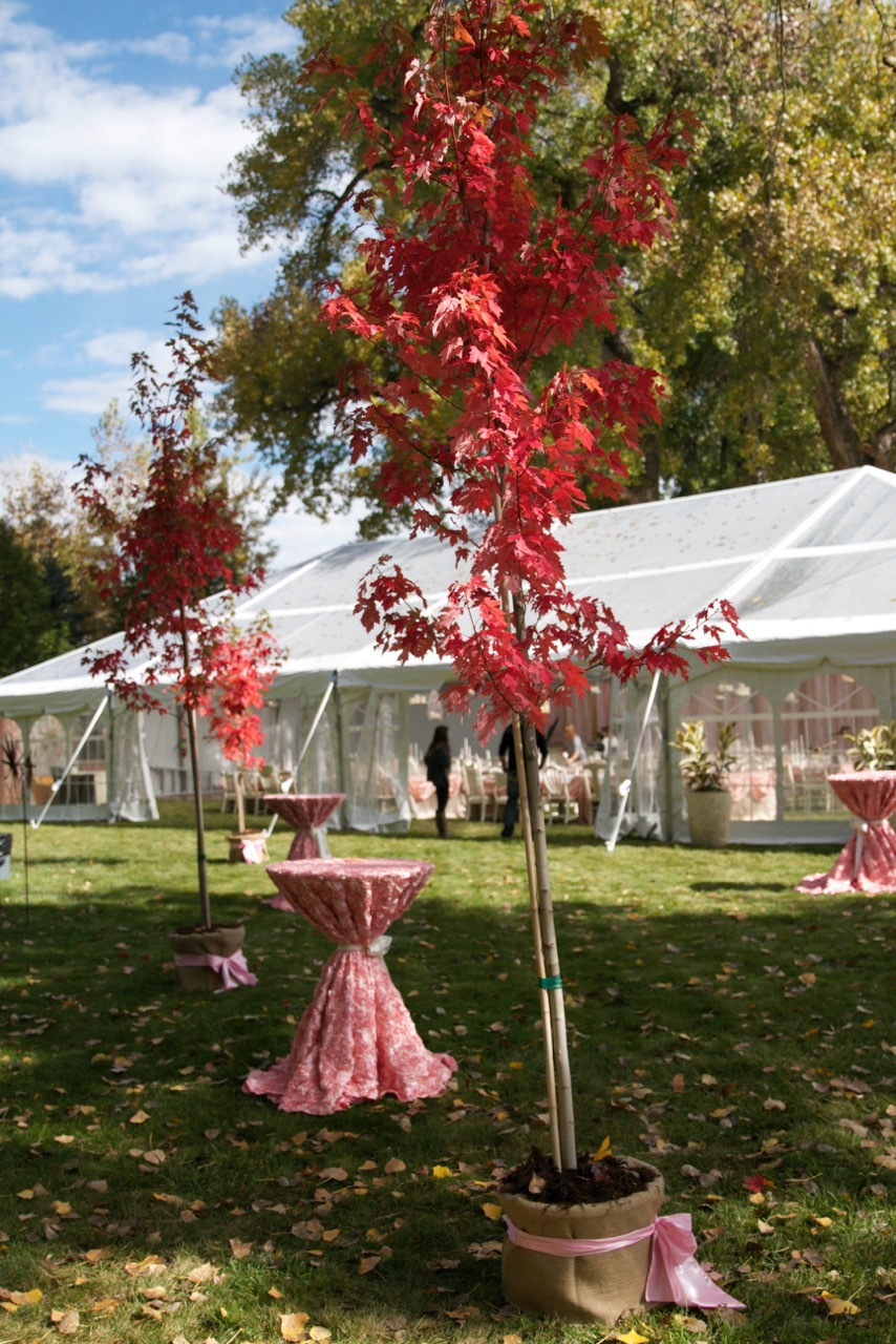 Tent rentals for summer events